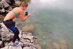 Christine Photographing Whitetip Reef Shark, San Cristóbal