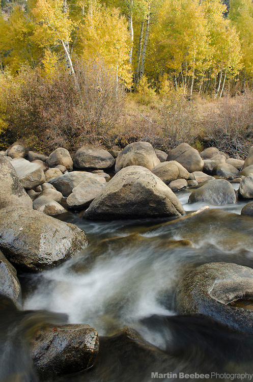 Quaking aspen (Populus tremuloides) above the West Fork Carson River, fall, Hope Valley, Toiyabe National Forest, California