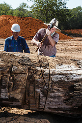 Naturalists cutting oak tree slice to examine  age of tree, Big Spring, Great Trinity Forest, Dallas, Texas, USA