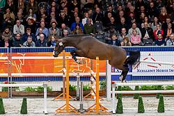 124, Max<br /> KWPN hengstenkeuring - 's Hertogenbosch 2020<br /> © Hippo Foto - Dirk Caremans<br />  30/01/2020