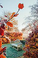 Fallen golden leaves in autumn