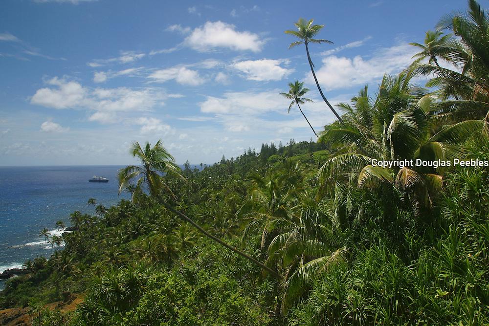 Pitcairn Island, palm trees<br />