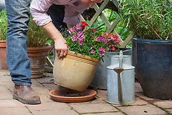 Placing a tray under containers and watering thoroughly before going on holiday