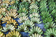 Bunches of bananas for sale at the local fresh market in the coastal fishing village of Ninh Hai, Ninh Thuan province, Central Vietnam. A large variety of fruit and vegetables are available for sale in fresh Vietnamese markets such as this, all being sold on small individual stalls.