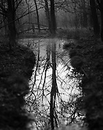 Reflection in a drainage channel at Whitmoor Common near Guildford, UK, on 9th Aptil 2015. Picture by Andrew Tobin/Tobinators Ltd