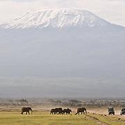 Elephants, Mount Kilamanjaro and tourists. Amboseli National Park.
