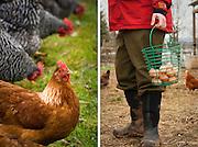 The Eastside Egg Cooperative coop at Zenger Farm in Portland, Oregon