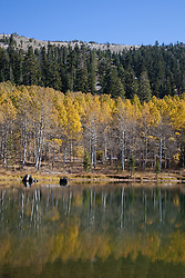 """""""Aspens at Marlette Lake 1"""" - These aspens were photographed in the fall at Marlette Lake, Nevada."""