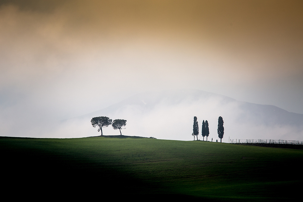 Cypresses and Pines.<br /> Photo by Lorenz Berna