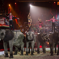 Members of the Caselly family perform on elephants trained by Rene Caselly during the premiere of the new show titled Lights of the Universe in Budapest, Hungary on October 05, 2013. ATTILA VOLGYI