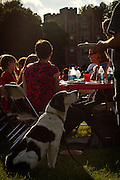 An intruiged canine companion sits patiently, eyeing a plate of food just out of reach during the all-reunion picnic during Alumni Reunion 2012 at Grinnell College.