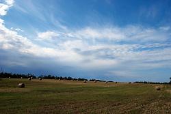 Campo di grano in zona Apani (Brindisi)