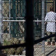 """Detainees in the outdoor recreation area in Camp 5, which is a maximum-security detention facility where the most uncooperative as well as detainees with the most intelligence value are housed at the detention facility in Guantanamo Bay, Cuba. Approximately 250 """"unlawful enemy combatants"""" captured since the September 11, attacks on the United States continue to be held at the detention facility. (Image reviewed by military official prior to transmission)"""