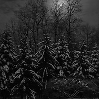A moonlit winter scene on New Year's Eve evokes a sense of foreboding...2020?