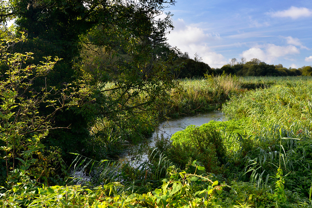 Water meadows in the Test Valley near Stockbridge, Hampshire.