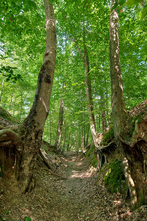 A well-worn section of the Old Trace at Sunken Trace at Milepost 41.5 on the Natchez Trace Parkway in Tupelo, Mississippi on Friday, May 18, 2018. Copyright 2018 Jason Barnette