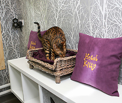EXCLUSIVE Hotel Kitty in Kent claims to be Britain's most lavish cattery, offering cats temperature-controlled suites, spa facilities, pampering packages and a gourmet menu. High-tech cameras are placed in every room so owners can see their pets anytime via smartphones. A week-long stay in one of the best suites can cost up to £245 with meals an additional £4 each.<br /> <br /> <br /> <br /> These Pictures are for use on Printed Media or That company,s Website.No Social media use.Without Prior Consent from the Copyright Owner.Please see Rights Usage Terms.<br /> <br /> <br /> <br /> <br /> <br /> <br /> <br /> <br />6 June 2017.<br /><br />Please byline: IKM PICS/Jim Bennett/Vantagenews.com
