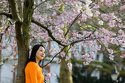 © Licensed to London News Pictures. 11/03/2020. London, UK. A woman poses for photographs under Cherry tree in St James's Park as it starts to bloom. Photo credit: Dinendra Haria/LNP