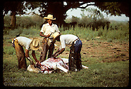 06: PANTANAL USES OF CATTLE