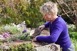 Carol Klein tidying and adding grit mulch around pulsatillas