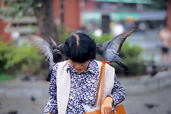 Pigeons At Senso-ji Temple