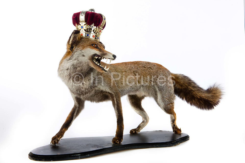 Stuffed fox with crown, left on public transport, held in the Lost Property office of London Transport.<br /> About 184,000 items are left on London public transport systems every year, and they do the best they can to reunite passengers with their lost belongings!