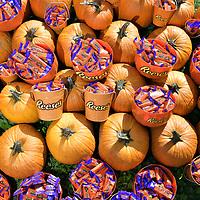 Reese's Pumpkin Patch