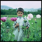 A boy stands in the poppy field, Badakshan.