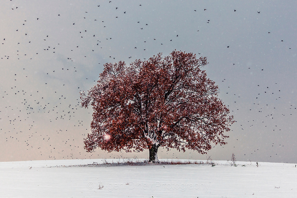 Red tree in a middle of snow field
