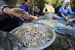 Fish Pond<br />•4 families: Mr. Bai's; Mr. Ki's; Mr. Do's; and Mr. Nid's families<br />•Cost to get permission to get fish is 3 million Kip<br />•Income: 9 million Kip<br />•7 ponds to drain for fish<br />Ekxang Village, Phonhong District, Vientiane Province