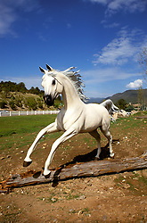 """New Mexico: Ruidoso, """"Free Spirits"""", horse sculpture, sculptor Dave McGary ,  Photo: nmhors104.Photo copyright Lee Foster, www.fostertravel.com, 510/549-2202, lee@fostertravel.com"""