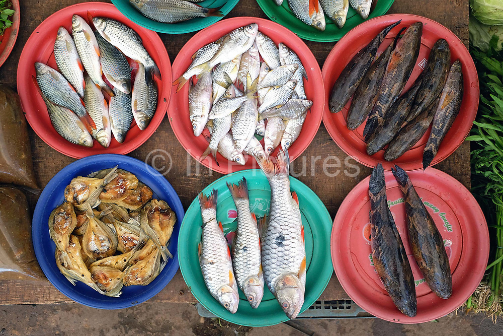 Fish for sale at Hua Kua market on the outskirts of Vientiane city, Lao PDR. The Lao are very reliant on products collected or caught from the wild in nearby forests, fields and streams. A walk through any market will illustrate the agro and bio-diversity of Laos.