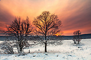 Snow white valley with trees at sunrise