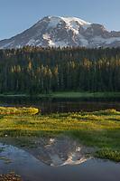 Mount Rainier mirrored in Reflection Lake. Mount Rainier National Park Washington