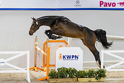 141, Néxtra Ordinary<br /> KWPN Hengstenkeuring 2021<br /> © Hippo Foto - Dirk Caremans<br />  03/02/2021