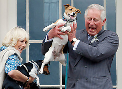 File photo dated 24/06/15 of the Prince of Wales and the Duchess of Cornwall holding the Duchess' dogs Beth (left) and Bluebell (right) during the inaugural Dumfries House Dog Show at Dumfries House, Cumnock, Ayrshire. Charles and Camilla are celebrating their 15th wedding anniversary on Friday, after they were reunited on Monday when the 72-year-old duchess came out of a 14-day self-isolation on the Balmoral estate in Aberdeenshire.