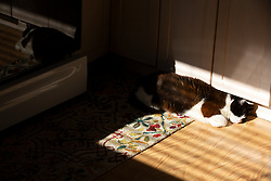 Lewis the cat naps in the sunny spot on his kitchen floor in Oakland, Calif., Tuesday, Oct. 27, 2020. (Photo by D. Ross Cameron)