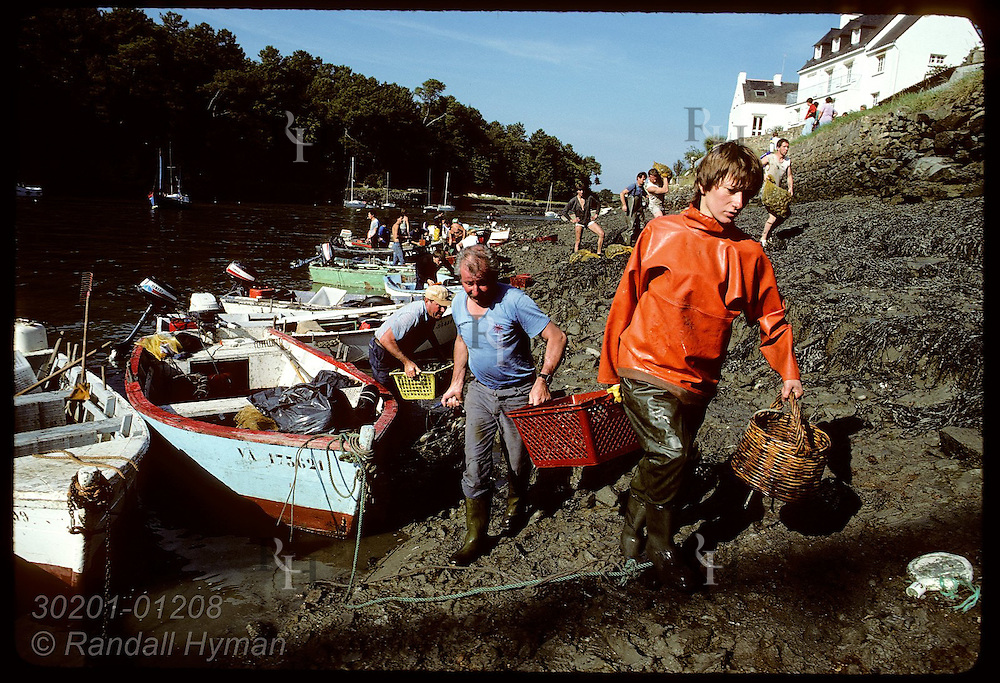 Clammers arrive in boats @ Le Bono, Auray River, with their day's harvest. France