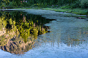 Watergrass on Picture Lake frames a reflection of Mount Hermann in the North Cascades of Washington state.
