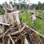 Dayak man walks through an area of forest that has been slashed-and-burned
