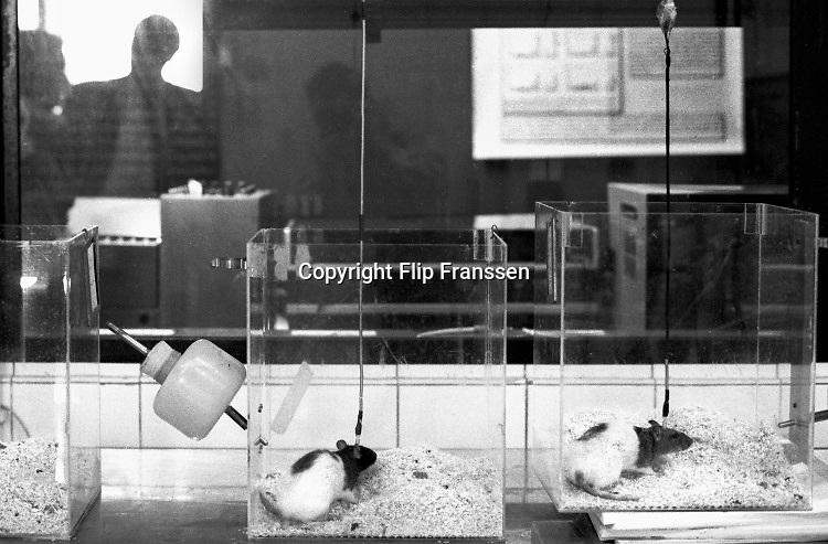 Nederland, Nijmegen, 15-10-1988Onderzoek bij ratten in het dierenlab van de faculteit psychologie, psychologisch lab, van de Radboud Universiteit, RU, voorheen KUN. Er wordt hersenonderzoek gedaan .  Medische wetenschap.Foto: Flip Franssen