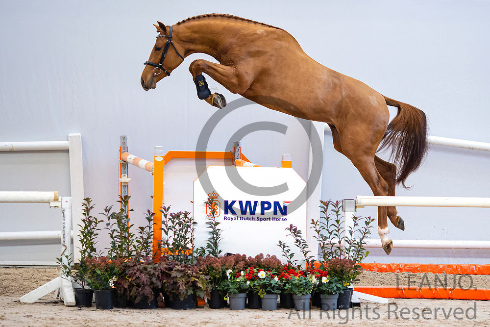 Nova fan 'e Five<br /> KWPN Select Sale 2020 <br /> © DigiShots