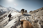 Crossing a pass during the 5 day winter journey out of the Pamir plateau, down to the lower valley..Up and over the Shower pass..Between Zang Kuk and  Zard-e Bar shepherd house..Going back down to Sarhad village with a yak caravan led by 2 Wakhi traders: Shur Ali and Roz Ali...Trekking down the Wakhan frozen river, the only way down to leave the high altitude Little Pamir plateau, home of the Afghan Kyrgyz community.
