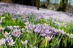 15 degrees c and its beginning to look at like Spring in Ecclesfield.24 February 2011.Images © Paul David Drabble
