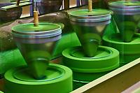 Japon, île de Honshu, région de Kansaï, Uji, usine de thé, moulin à matcha // Japan, Honshu island, Kansai region, Uji, tea factory, matcha tea mill