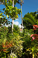 A wide variety of tropical plants growing around owner John Criswick's house at the St. Rose Nursery, La Mode, St. George's, Grenada, West Indies, Caribbean