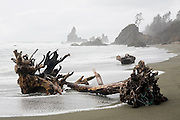 Driftwood washed ashore lies on Shi Shi Beach, with jagged sea stacks in the background, in Olympic National Park, Washington.