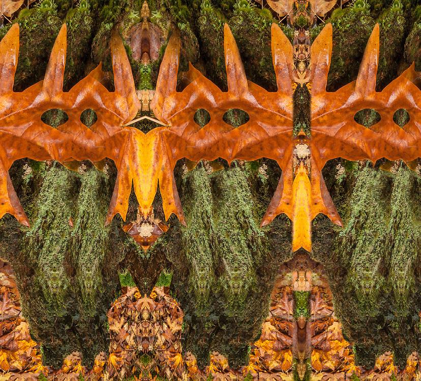 """Masquarade "", derivative image from a photo of a bigleaf maple leaf (Acer macrophyllum), October, Skagit River watershed, North Cascades National Park, Washington, USA"