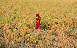 October 25, 2016 - Allahabad, Uttar Pradesh, India - Allahabad: A women farmer walks at her field at outskirts of Allahabad. Agriculture remains as important economic activity for the India, with wheat and rice being the main food crops. (Credit Image: © Prabhat Kumar Verma via ZUMA Wire)