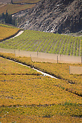 High angle view of vineyard, Elqui Valley, Chile